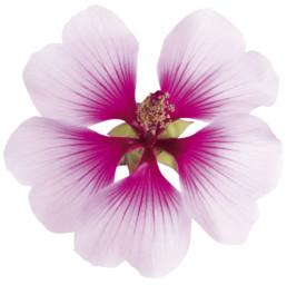 Gartenfotografie Garten Blüte Pflanze