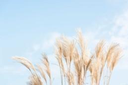 Gartenfotografie Garten Helle Gräser vor hellem Himmel