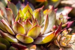 Gartenfotografie Garten Pflanzen