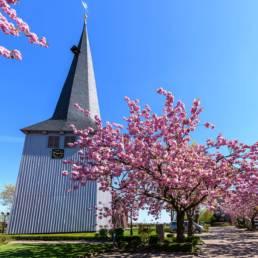 Altes, Land, Kirschbaumblüte; Nicolaikirche, Borstel, Jork